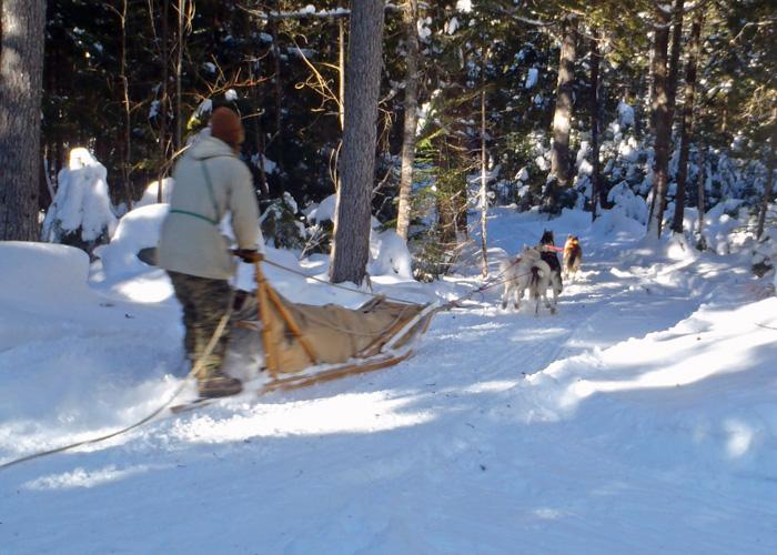 Dog team on trail