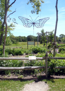 The Butterfly Garden at Felix Neck Wildlife Sanctuary on Martha's Vineyard. (Tim Jones/EasternSlopes.com)