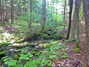 This section of the Grafton Loop Trail is a lovely meander back and forth across a brook in cool, quiet woods. (EasternSlopes.com)