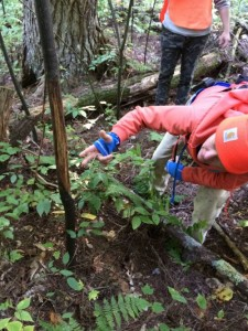 We found rubs – where male deer had rubbed their antlers against young striped maple saplings. (photo by Deborah Lee Luskin for www.easternslopes.com)